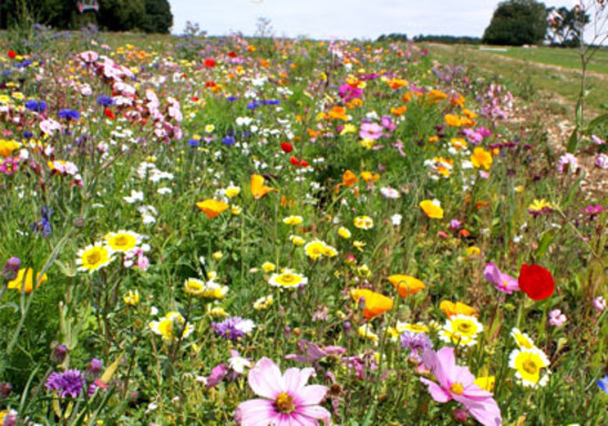 Wildflower Turf Suppliers in Lincolnshire